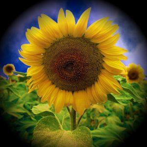 Flowers-SerieS1-Bild1
