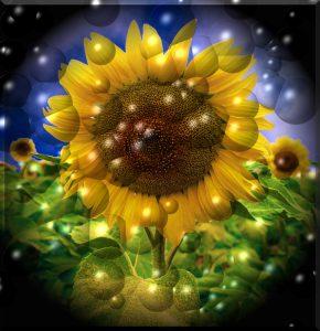 Flowers-SerieS1-Bild14