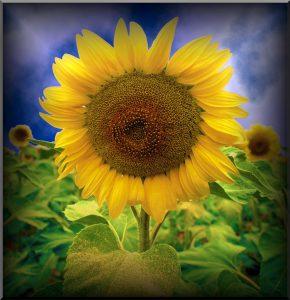 Flowers-SerieS1-Bild1Rand