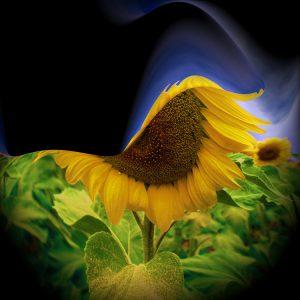 Flowers-SerieS1-Bild2