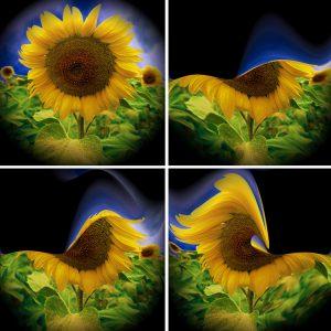 Flowers-SerieS1-Bild7