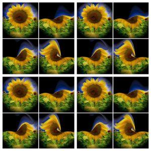 Flowers-SerieS1-Bild8