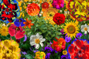 Bild006a-Blumen007-Art-Excellent