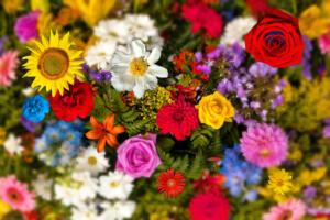 Bild009a-Blumen001a-Menuin004-TT1-Art