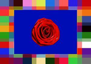Rosen081-SerieR7-Bild19-Art