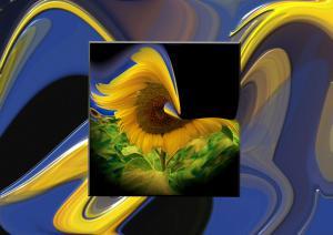 Sonnenblumen003-Flowers-SerieS8-Art8
