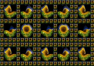 Sonnenblumen006-SerieS10-Sonnenblumen