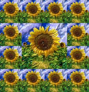 Flowers018-Sonne14a - Kopie