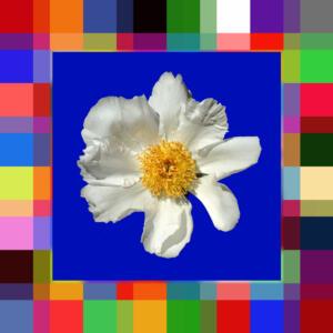 Fliesen009c-Bild012c-Flowers-Serie A-Bild 3