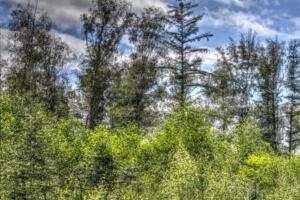 Wald-Herbst01-Art