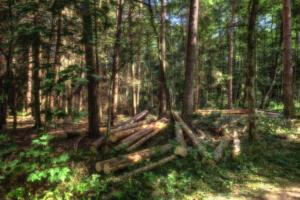 Wald-Herbst03-Excellent