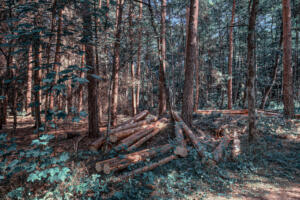 Wald-Herbst05-Art