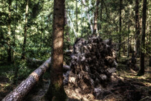 Wald-Herbst07-Art
