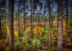 Wald-Herbst09-Art