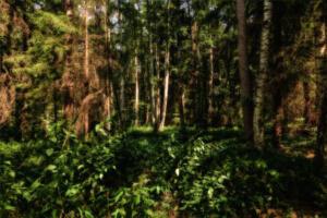 Wald-Herbst11- Excellent