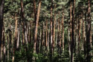 Wald-Herbst13-Art