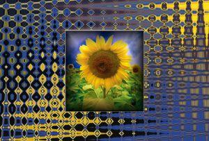 Sonnenblume050