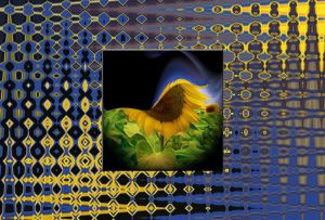 Sonnenblume052