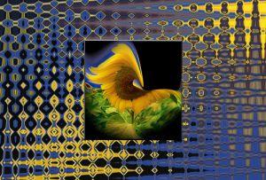 Sonnenblume053