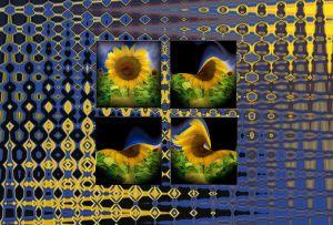 Sonnenblume054