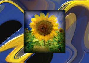 Stripes024-Sonnenblumen