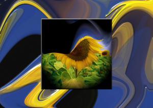 Stripes024a-Sonnenblumen-SerieS1-Bild63