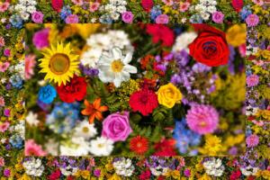Bild010a-Blumen005-Flowers-SerieB1-Excellent