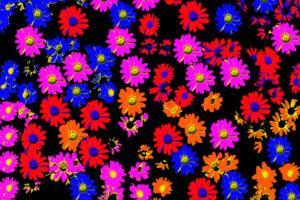 Bild011a-Popart002-BlumePop1