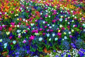 Blumen02b-7627-Farbe-Art-Insel Mainau