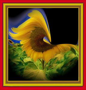 Sonnenblume-Art04