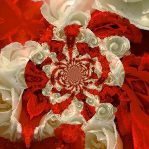 Rose3d