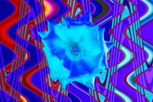 Rose003a-Weichzeichner-Blau