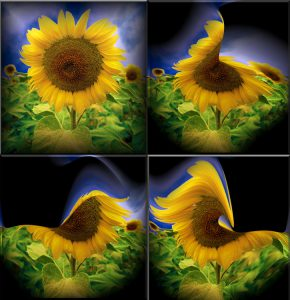 Flowers-SerieS1-Bild15
