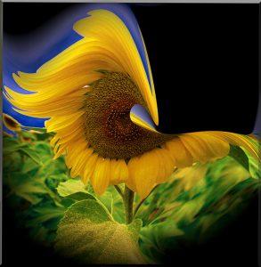 Flowers-SerieS1-Bild4Rand