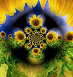 Flowers-SerieS1-Bild5