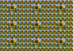 Flowers-SerieS4-4
