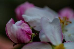 Blüten005-0113Wettbewerb