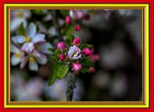 Blüten013-Wettbewerb