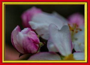 Blüten014-Wettbewerb
