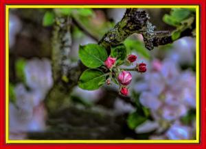 Blüten018-Wettbewerb