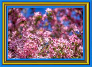 Mandel026-Blumen2-Art