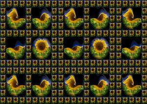 Flowers086-Sonnenblumen006-SerieS10-Sonnenblumen
