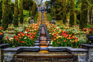 Flowers091-Tulpen001-Stella04-Blumen01b-7622 Art