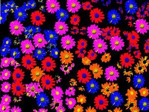 Flowers100-Popart002-BlumePop1