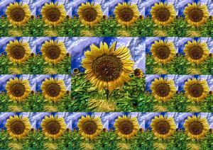 Sonnenblumen017a-Flowers-SerieS4-3