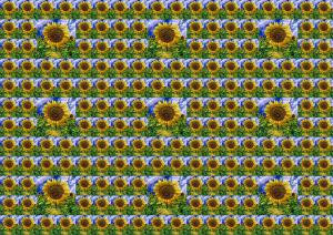 Sonnenblumen017b-SerieS4-4
