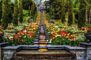 Blumen01b-7622 Art