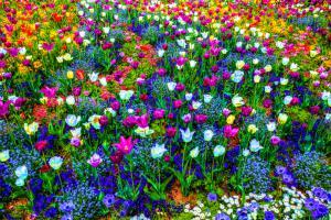 Blumen02b-7627-Farbe-Art