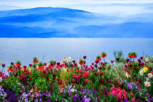 Blumen03-7370 4-Art