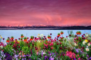 Blumen03a-7370 4-Art